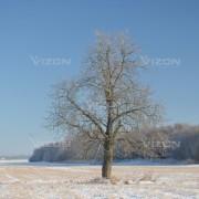 laukuose_augantis_medis