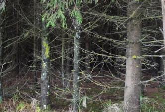 Leidimai kirsti mišką