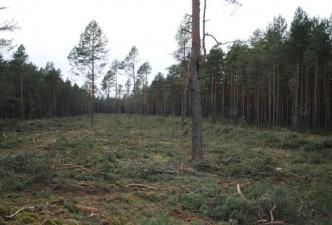Už įžūliai iškirstą mišką teks sumokėti apie du milijonus litų