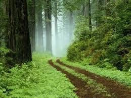 Kovo 21 – pasaulinė miškų diena