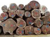 Valstybinė miškų tarnyba pasirašė sutartį su Muitinės departamentu