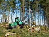 Valstybinė miškų tarnyba: tik kas ketvirta urėdija racionaliai naudoja medieną
