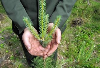 Pradėtas papildomas valstybinių miškų kirtimų apskaitos įvertinimas