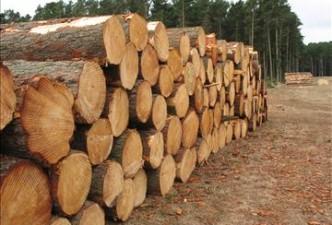 """""""Stora Enso Lietuva"""" vadovas kritiškai vertina urėdijų žaliavinės medienos kainas"""