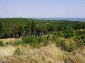 UNESCO nepritaria Kuršių nerijos miškų perdavimui urėdijoms
