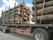 Aplinkos ministras patvirtino naują apvaliosios medienos gabenimo tvarką