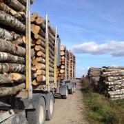 perka tarine mediena Panevezio