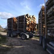 perka tarine mediena Pasvalio