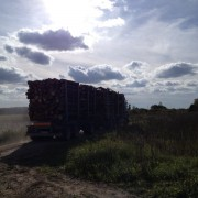 perka tarine mediena Siauliuose
