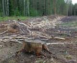 Sustiprintas dėmesys kovai su neteisėtais kirtimais šalies miškuose duoda rezultatų