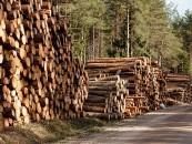 Urėdijų pelnus apkarpė smukusi apvaliosios medienos kaina