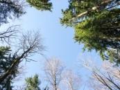 VMI tikrins medienos pardavėjus ir miškotvarkos projektų rengėjus