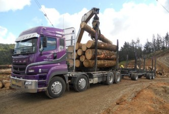 Užkardomas kelias nelegaliam medienos gabenimui
