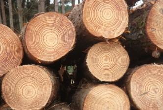 Iš miško apyvartos mokesčio į biudžetą įkrito tik 1 mln. eurų