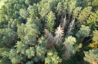 Parama miško veisėjams mokama už medžių rūšis