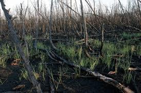 Miškuose akimirksniu didėja gaisrų pavojus