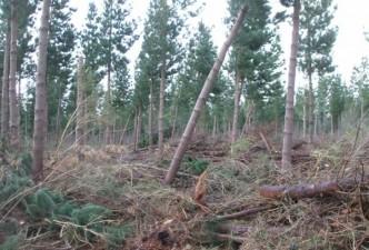 Miškams apsaugoti ir atkurti – visos galimybės